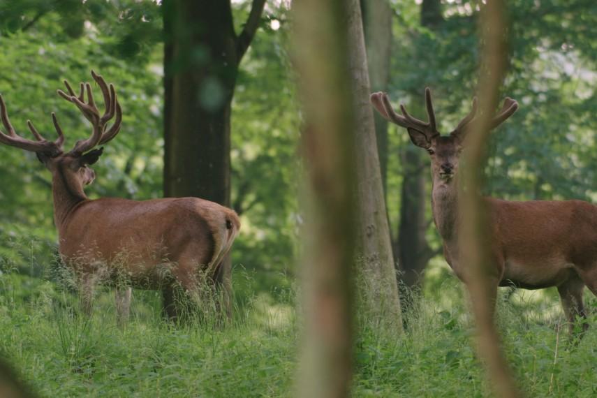 Auf Der Jagd Wem Gehört Die Natur Winterthur